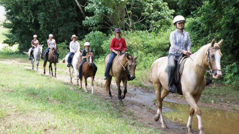 Paardrijden Clinic