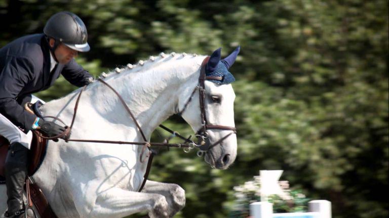 Paardenshow