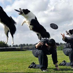 Demo Dogfrisbee