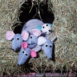 Beschuit met muisjes