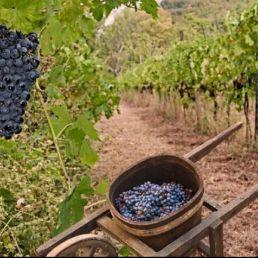 Een Wijnproeverij Op Locatie