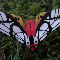 Animatie Ophemert  (NL) GIGA VLINDER Bruiloft: LEVENDE Vlinders