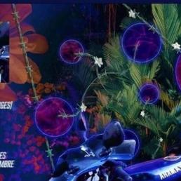 MC Brugge  (BE) HEADLINE SHOW: LAIT DE COCO